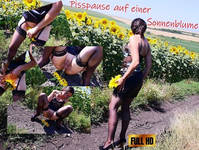Pisspause auf einer Sonnenblume